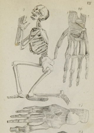 Dr. Judd, being a dedicated Christian, chose a familiar pose for the skeleton illustration in his medical textbook.